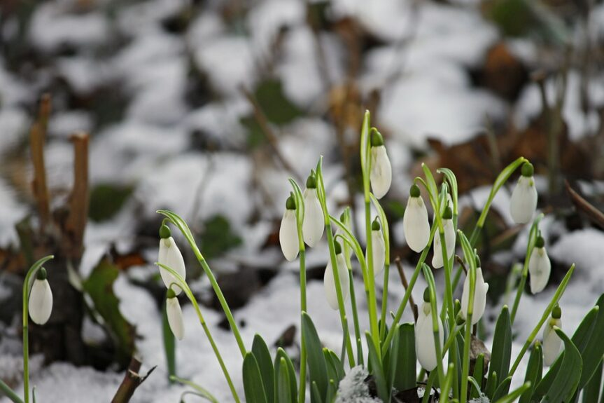 Doteky jara